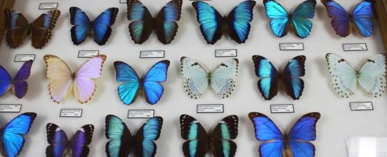 papillons bleus - physique des catastrophes